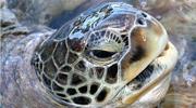 Visit the Turtle Farm