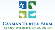 Visit the Turtle Farm